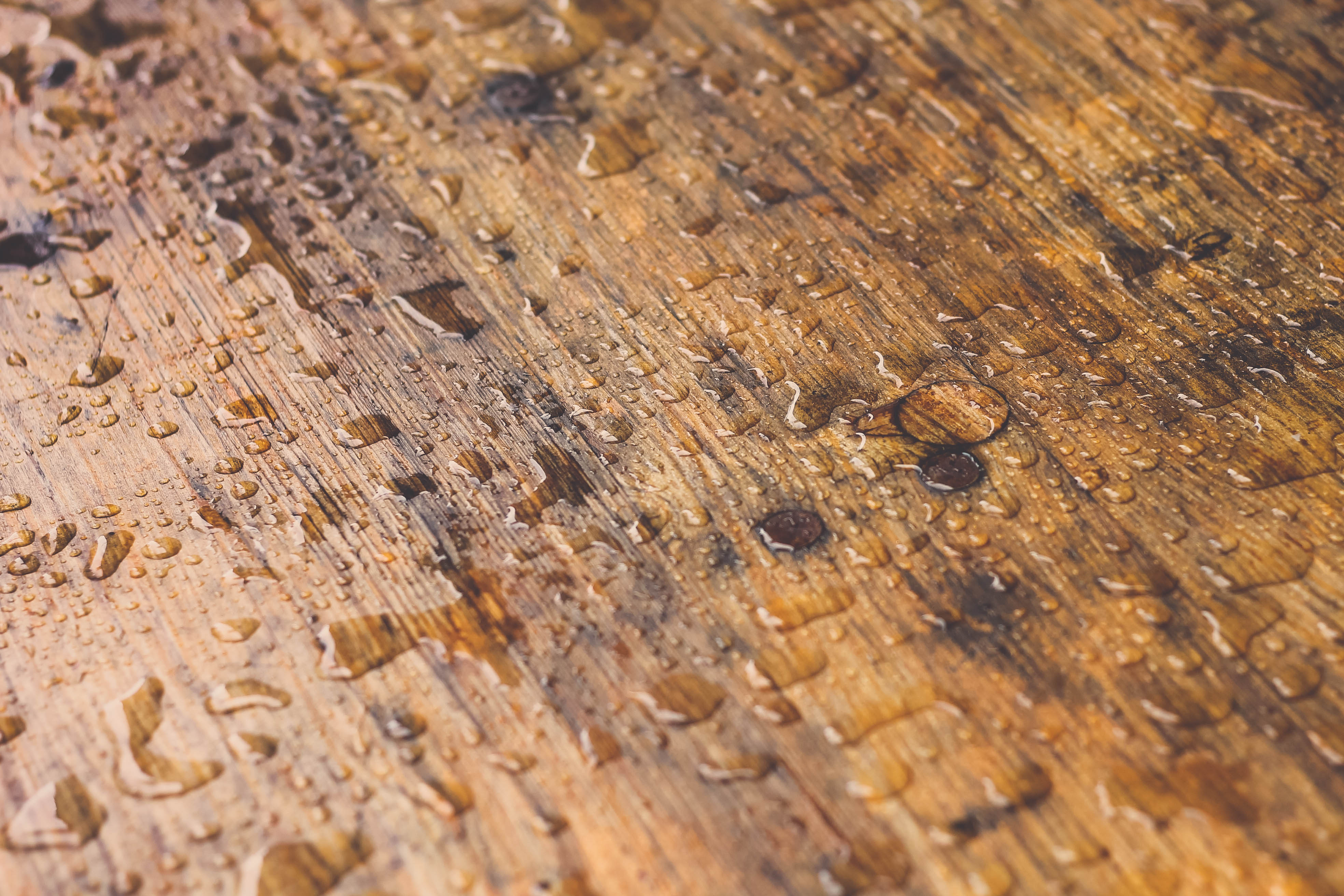 How Construction Drying Services Can Help Keep Wood's Integrity