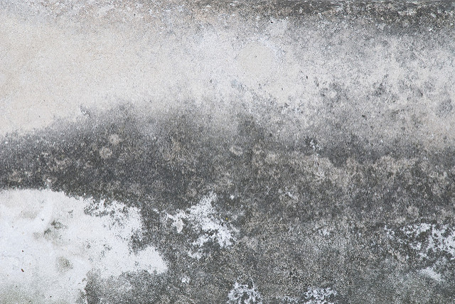 mold on concrete