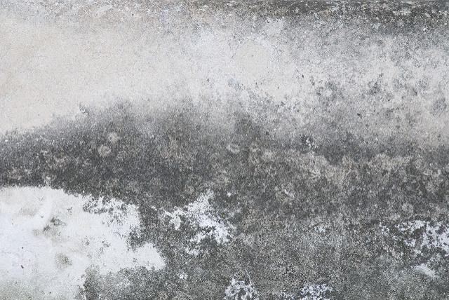 Can Mold Grow On Concrete Polygon